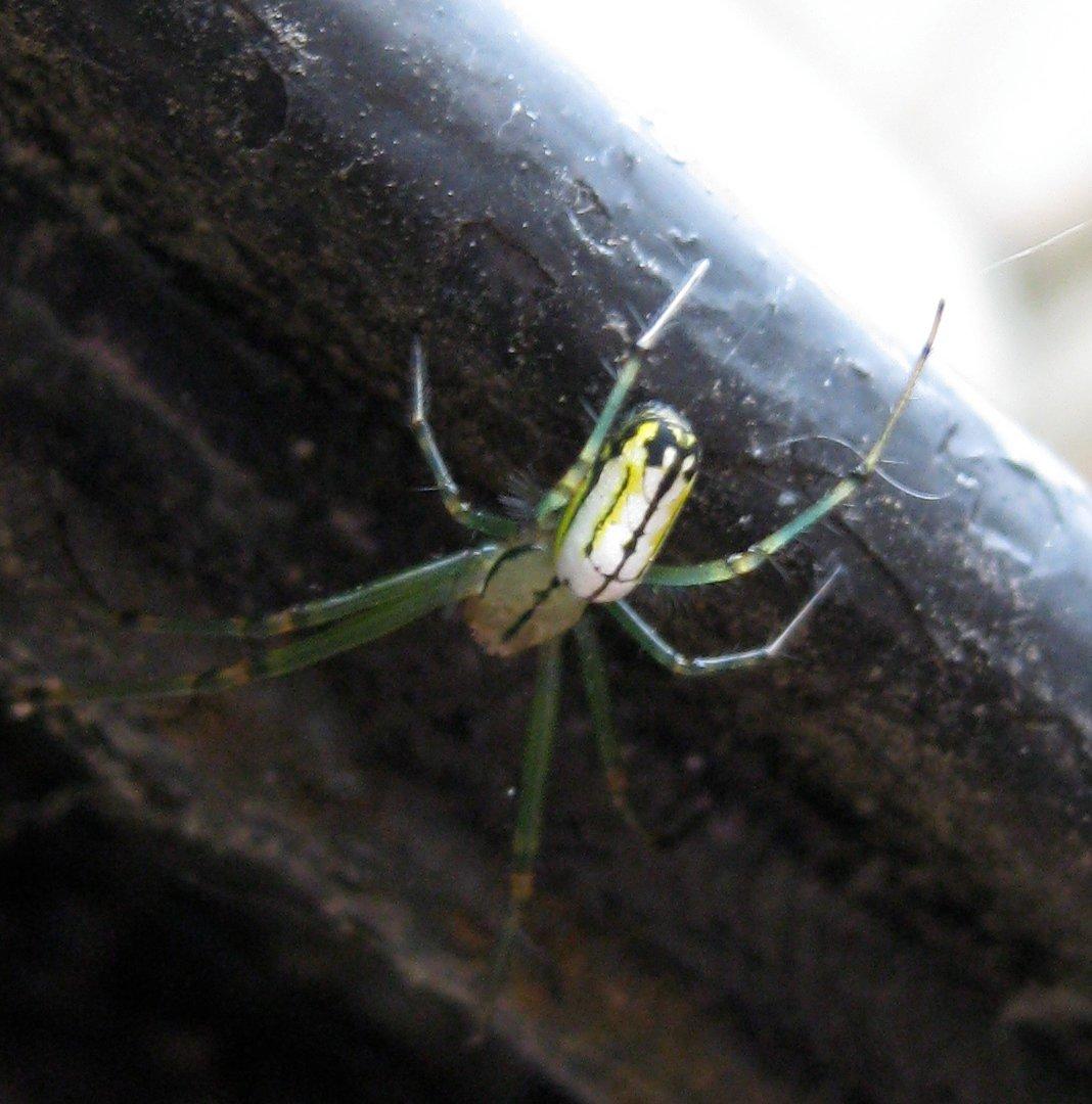 spidero