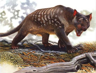 marsupiallion